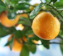 Jak zrobić konfiturę ze skórek pomarańczy?