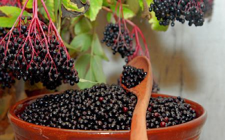 Czarny bez - domowy sposób na kaca, reumatyzm i anemię