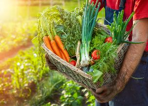 Nowalijki - jak wybierać i przechowywać młode warzywa