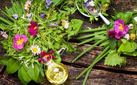 Jadalne chwasty - które dzikie zioła można wykorzystywać w kuchni? [WIDEO]